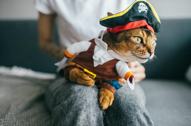 kostume til en kat